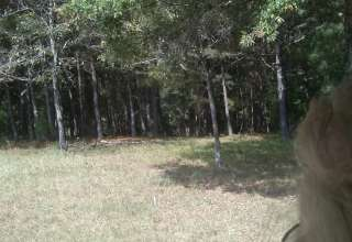 Backwoods Living
