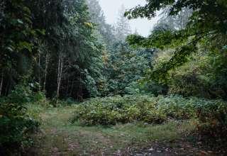 Upriver Enchanted Forest
