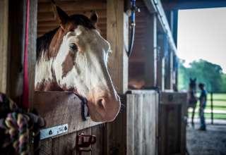 Loretta Lynn's Ranch