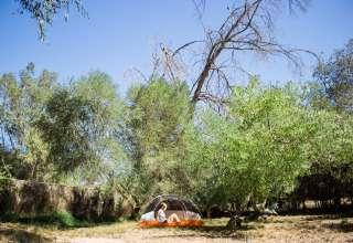 Dome Asylum, Hippie Homestead