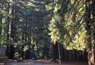 Redwood Rain Forest Camp