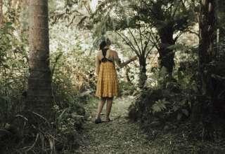 Ola'a Rainforest Property