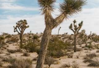 Sun Mesa View
