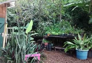 Macadamia & Coffee Farm