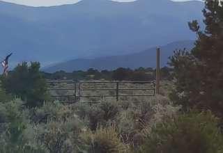 Wild Daisy Farm