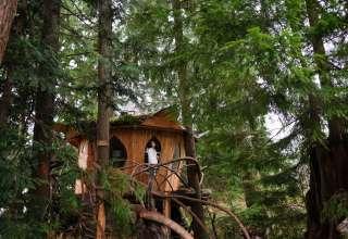 Tracy Rice's  3 Tree Houses