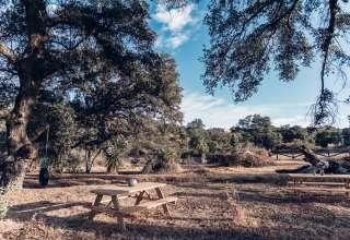Glampsite under Giant Oak Trees