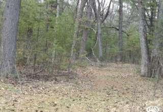 Arkansas Forest Retreat