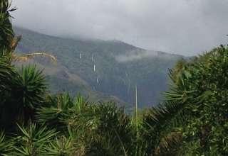 Kaupo Maui Puka a huhu Farm