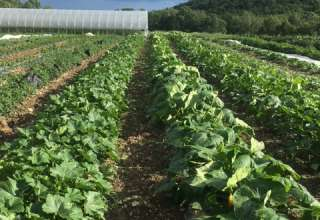 Plowbreak Farm