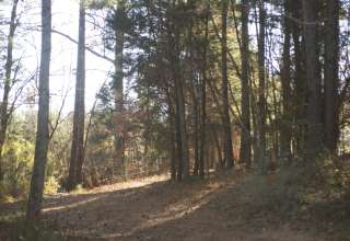 High Ridge Gardens