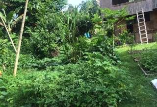 Moaniala Rain Forest Camping