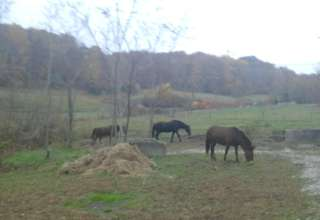 Robe Basin Farm