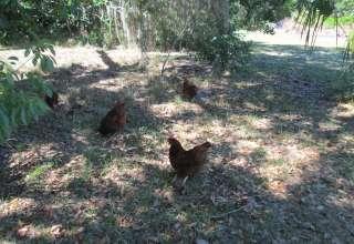 Farmhouse Gardens/Oak Hammock