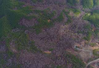 Mt. Doom's Haunted Woodlands