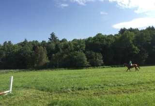 Daisy Hill Farm