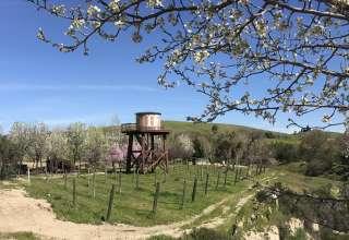 Hartley Farms Organic Orchard