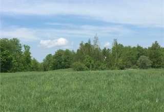 Olga G.'s Land
