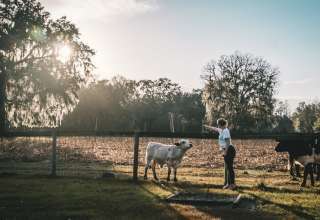 Timberline Farm