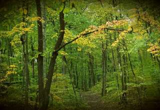 Nahimana Forest