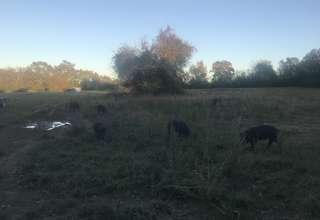 Smithson Family Farms LLC