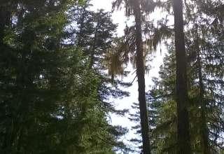 A Cascade Getaway