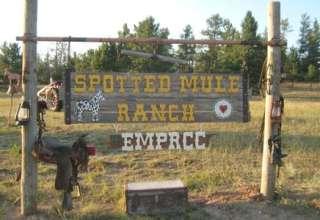 Lemke's Spotted Mule Ranch