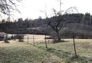 Pisgah Forest Mountain Meadow