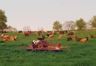 Grassway Organics Farm