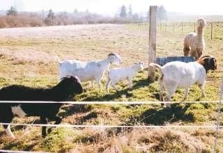 Sublime Organics Farm Stay