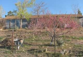 Stallion Springs Organic Farm