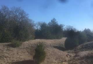 Greg B.'s Rustic Cedars