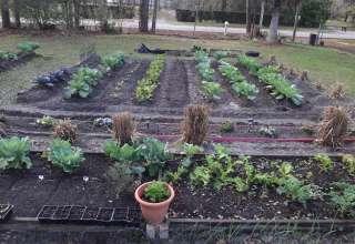 Harvest Blessings Garden