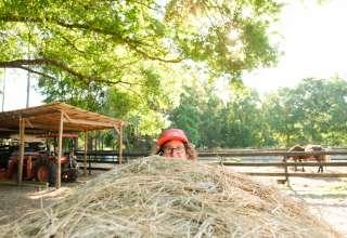 Hart Horse Farm