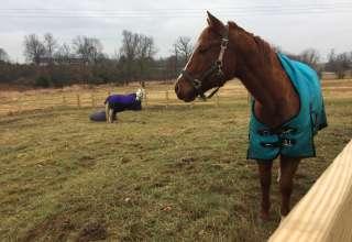 Mixed Team at Brownstone Farm