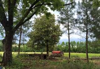 Beasley Timber Farm