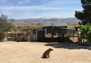 Jazzlin Rose Ranch