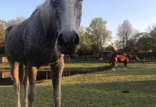 Lake Tillery Equestrian Center