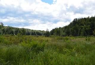 Holcomb Timber Farm