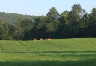 Heart of Vermont Farm