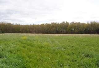 Prancing Deer Farm