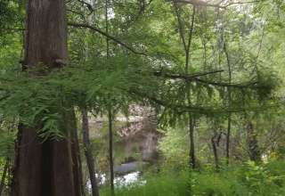 Withlacoochee River Retreat