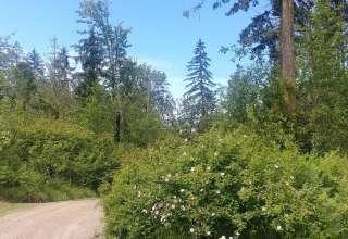 Springer's Forest Grove