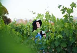 Hickman Family Vineyards