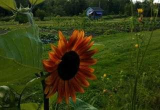 Vespertine Gardens