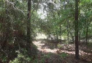 Treehouse farm