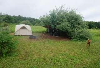 Doggie Camp