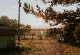 Mini Alpaca ranch