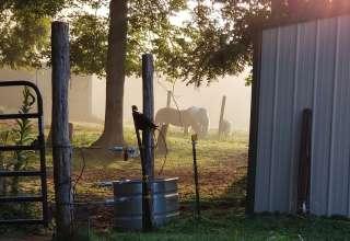 Drury Family Farm