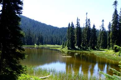 Trout Lake Creek Campground